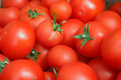Group of tomatoes. Fresh tomatoes ready for market Stock Images