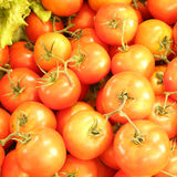 Group of tomatoes Stock Photo