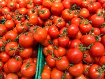 Group of tomatoes Stock Images