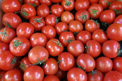 Group of tomatoes Royalty Free Stock Photo
