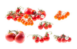 Group of tomatoes Royalty Free Stock Photos