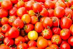 Group of  tomatoes Stock Image