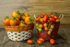Group of tomatoes Royalty Free Stock Images