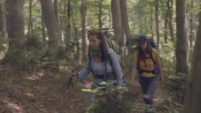 Group of tourist people walking on forest path while summer travel