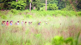 Group of tourist walking along lush meadow stock footage
