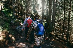 Group tourists backpack walking dense forest Travel backpacking. Group of tourists with backpack walking dense forest. Travel and backpacking lifestyle concept royalty free stock image