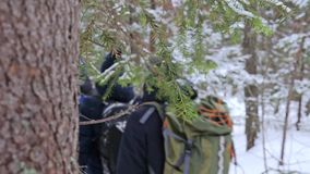 A group of tourists with backpacks on their shoulders goes through the winter forest. stock video