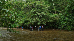 Group of tourists crossing the Mashpi river in the cloud forest area in Ecuador Stock Photography