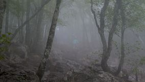 A group of tourists goes through the gloomy foggy forest. stock video