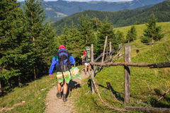 Group of tourists hiking in Carpathian mountains, nature landscape, Ukraine. Royalty Free Stock Photos