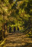 Group of tourists hiking. Through the forest Stock Photo