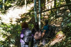 Group of tourists hiking. Through the forest Royalty Free Stock Images