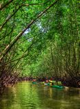 Group of tourists kayaking in the mangrove jungle Stock Photos