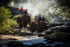 Group tourists to ride on an elephant in forest, Laos. royalty free stock photography