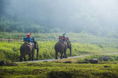 Group tourists to ride on an elephant in forest, Thailand. stock photos
