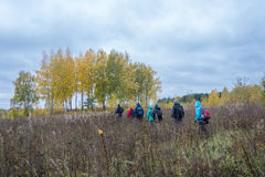 A group of tourists walking through the tall grass. A group of tourists walking through the tall grass along the birch grove Royalty Free Stock Image