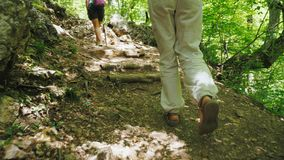 A group of tourists with wooden sticks in their hands walk in the woods along a hiking trail. A group of tourists with wooden sticks in their hands are walking stock video footage