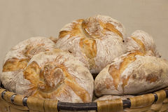 Group of traditional breads Royalty Free Stock Photos