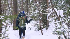 A group of tourists with backpacks on their shoulders goes through the winter forest. stock footage