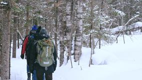 A group of tourists with backpacks on their shoulders goes through the winter forest. stock video footage