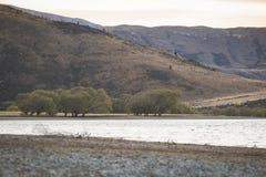 Group of tree besides lake Stock Photo