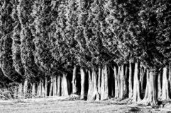 Group of tree canopies Royalty Free Stock Images