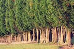 Group of tree canopies Stock Images