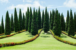 Group of tree in the park. On sunny day Royalty Free Stock Photos