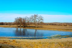 A group of trees on the bank of a frozen pond are reflected on the surface of the ice. In the background is blue sky royalty free stock images