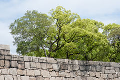 Group of trees behind a stone wall Royalty Free Stock Images