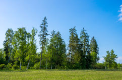 GROUP OF TREES Royalty Free Stock Images