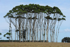 Group of trees on the country Royalty Free Stock Photos