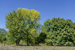 Group trees in early autumn, Razgrad Stock Image