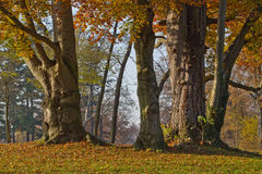 Group of trees in fall colors Stock Image