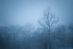 Group of trees in the fog Royalty Free Stock Images