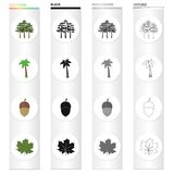 A group of trees in the forest, a palm tree, an acorn, a maple leaf. Forest set collection icons in cartoon black Stock Photos