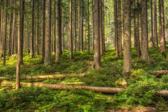 A group of trees. In the forrest Stock Image
