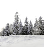 Group of trees Royalty Free Stock Photography