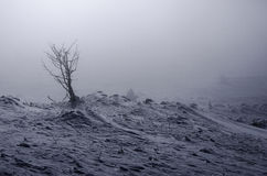group of trees hidden in the fog in the mountains only one tree shown Royalty Free Stock Photo