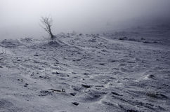 Group of trees hidden in the fog in the mountains only one tree shown Royalty Free Stock Images