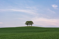 Group of trees on a hill Royalty Free Stock Photos