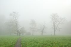 Group of trees in morning fog Stock Photo