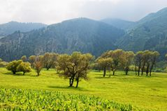 Group of trees in mountains Royalty Free Stock Photos