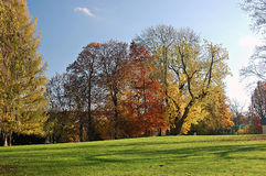 Group of trees in the park. Group of old trees on a meadow in the lock park of Altenburg in the fall Stock Photography