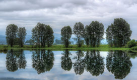 Group of Trees With Perfect Reflection in Water Stock Photo