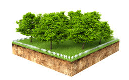 Group of trees on a piece of land Royalty Free Stock Photography