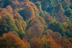 Beautiful Colours Of Autumn At Mountain royalty free stock photo