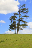 Group of trees standing alone in a field Royalty Free Stock Photos