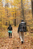 Group trekking. Three guys doing trekking in a Quebec forest during the fall season. They cary big backpacks and are going somewhere to camp Stock Photo