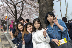 A group of trendy young girls posing with cherry blossom flowers background. Royalty Free Stock Images